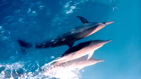 Delfínes comunes de Whild metrajes