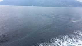 Delfínes comunes que saltan en el arco de una nave almacen de video