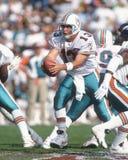 Delfínes de Dan Marino Miami Imagen de archivo libre de regalías