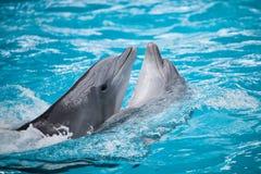 Delfínes de los pares Fotos de archivo libres de regalías