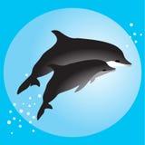 Delfínes de los pares que nadan en el océano Fotografía de archivo