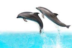 Delfínes de salto Imágenes de archivo libres de regalías