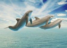 Delfínes de salto Fotografía de archivo libre de regalías