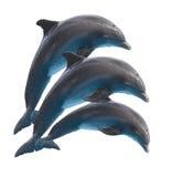 Delfínes de salto en blanco foto de archivo libre de regalías