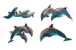 Delfínes de salto en blanco Imágenes de archivo libres de regalías