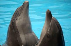 Delfínes del baile Fotografía de archivo libre de regalías