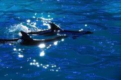 Delfínes en agua Imagenes de archivo