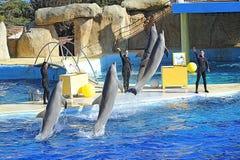 Delfínes en el marineland Foto de archivo libre de regalías