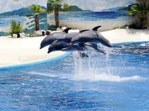 Delfínes en el parque zoológico de Madrid Foto de archivo libre de regalías
