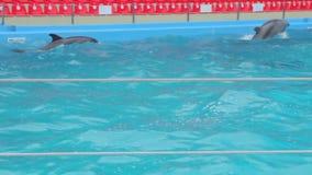 Delfínes en la piscina