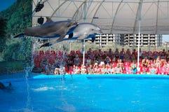 Delfínes en la piscina Foto de archivo
