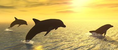 Delfínes en la puesta del sol Fotografía de archivo