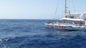 Delfínes en Madeira metrajes