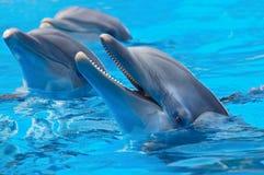 Delfínes felices Fotografía de archivo