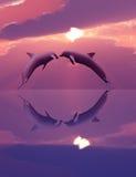 Delfínes que juegan en la puesta del sol Fotografía de archivo