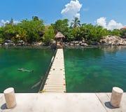 Delfínes que nadan en la isla tropical imagen de archivo libre de regalías