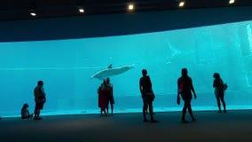 Delfínes que realizan la evolución dentro de un tanque de los di Génova de Acquario adentro almacen de video