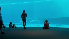 Delfínes que realizan la evolución dentro del acuario de Génova en 4k vertical almacen de video