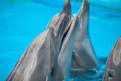 Delfínes sonrientes Fotos de archivo libres de regalías