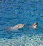 Delfínes sonrientes en Gold Coast, Australia imagenes de archivo
