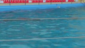 Delfínes subacuáticos en la piscina