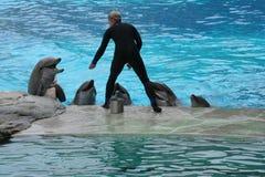 Delfínes y amaestrador Fotos de archivo libres de regalías