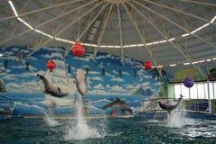 5 delfinów Fotografia Stock