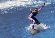 Delfinów dni przedstawienie Zabawia gości przy dolphin stadium fotografia stock