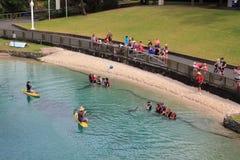 delfinów interakci jezioro fotografia stock