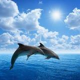 Delfinów skakać Zdjęcie Royalty Free