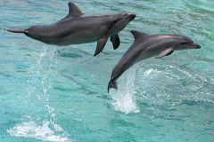 delfinów target1106_1_ obraz royalty free