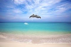 delfinów target1963_1_ obraz stock