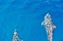 delfinów target2045_1_ Obraz Royalty Free