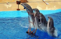 delfinów target43_1_ Zdjęcia Royalty Free