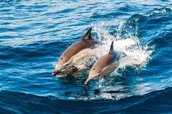 Delfinów target732_1_ Obrazy Royalty Free