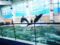 Delfinów wykonywać obrazy royalty free