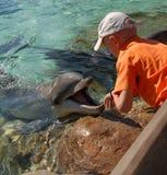 delfin Obraz Royalty Free