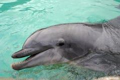 delfin Zdjęcia Royalty Free