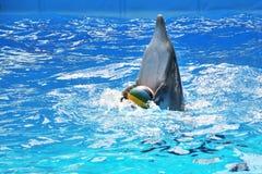Delfin Zdjęcie Stock