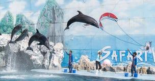 delfin Royaltyfria Bilder