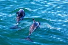 delfin obraz stock