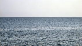 Delfin! Fotografering för Bildbyråer