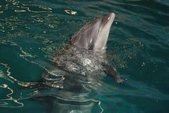 Delfin 3 Zdjęcia Royalty Free