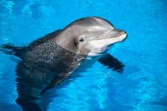 Delfin behandla som ett barn Fotografering för Bildbyråer