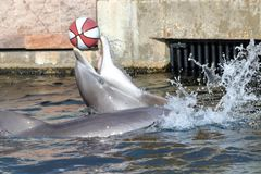 Delfin in dierentuin in Duitsland in Nuremberg royalty-vrije stock foto's