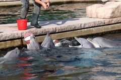 Delfin in dierentuin in Duitsland in Nuremberg royalty-vrije stock afbeeldingen