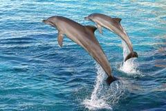 delfin dwa Obrazy Royalty Free