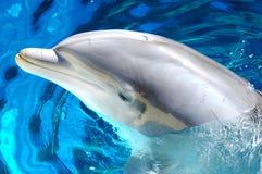 delfin för 2 bottlenose arkivbilder