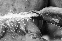 Delfin fontanna Zdjęcie Royalty Free