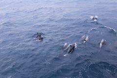 Delfin grupa Zdjęcie Stock